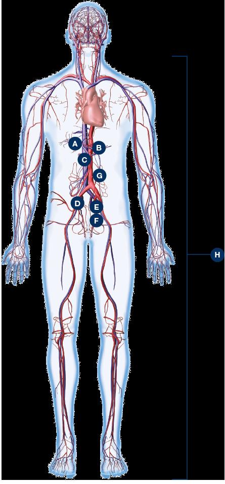 anatomyMan